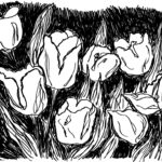 Tulips in Ink